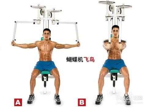 怎样把<a href=http://www.muscles.com.cn/xiongbu/ target=_blank class=infotextkey>胸肌</a>练大